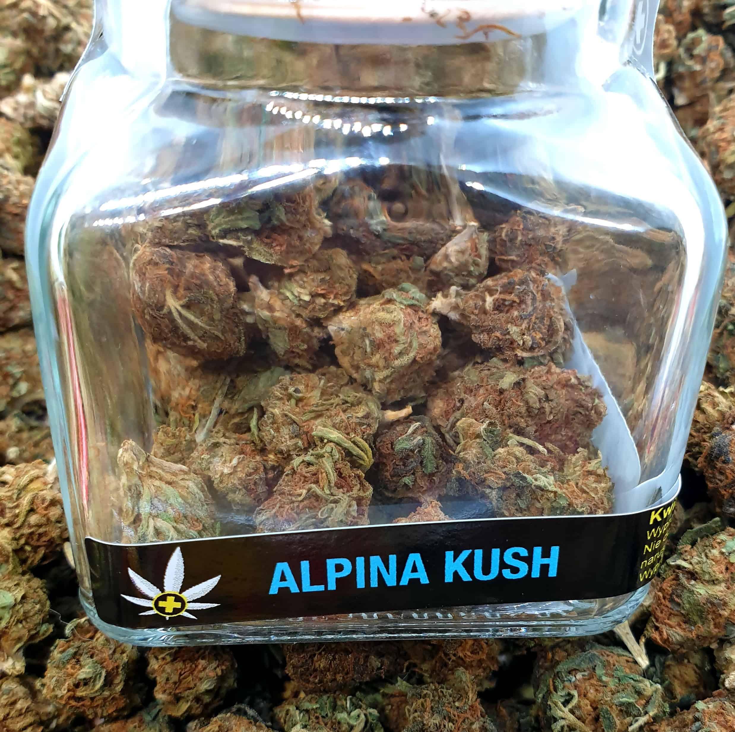 Image of ALPINA KUSH - 11,21% CBD - 5g